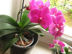 orchideen orchitop