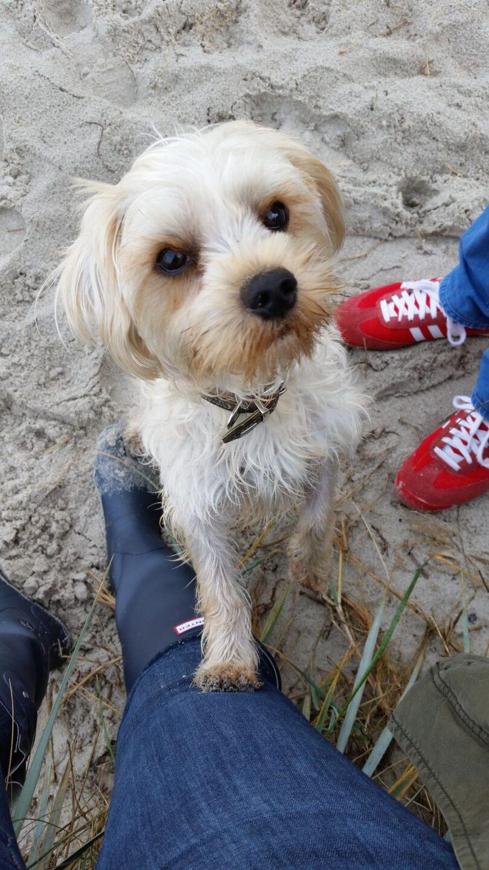 testmonster testmonsterblog bommel urlaub mit hund