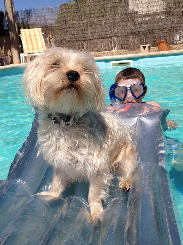 dreiraumhaus ferienhaus ferienwohnung ferienhausmiete urlaub mit hund