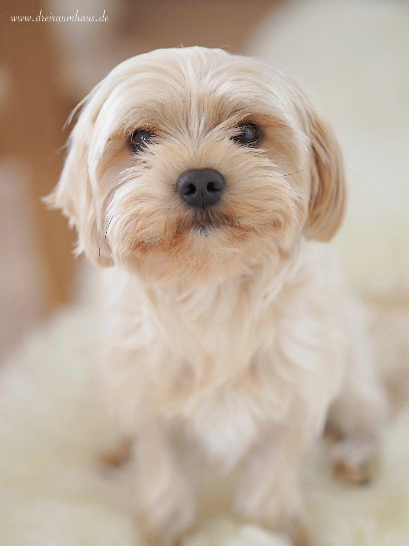 dreiraumhaus foodprint hundefutter fressnapf bommel havaneser-10