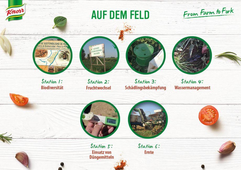 knorr_infografik_auf-dem-feld