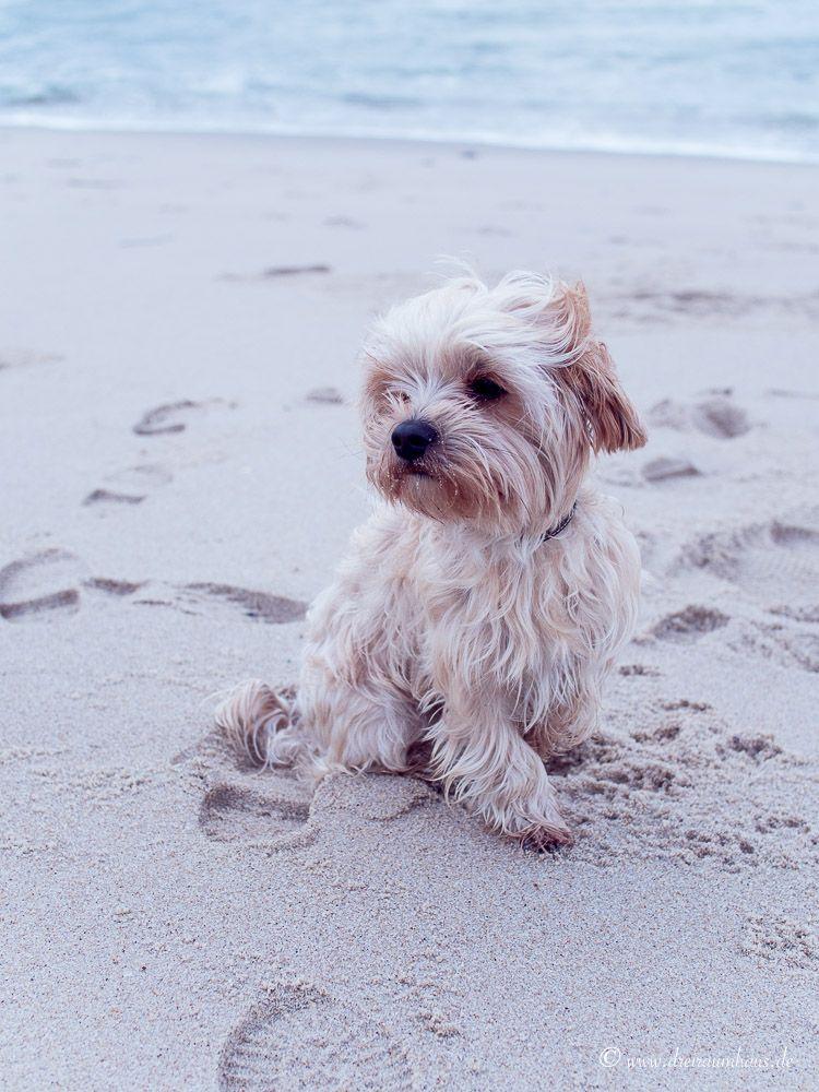 Liebe fürs Leben…ein Hund oder doch kein Hund?