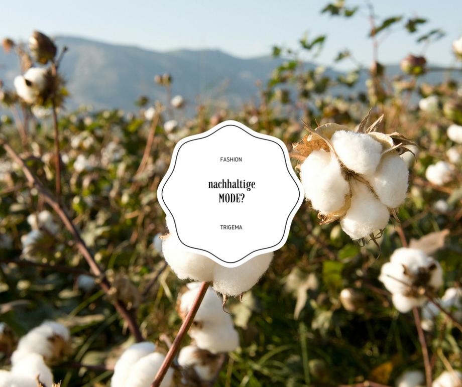 Kann Nachhaltigkeit auch Fashion sein? TRIGEMA…