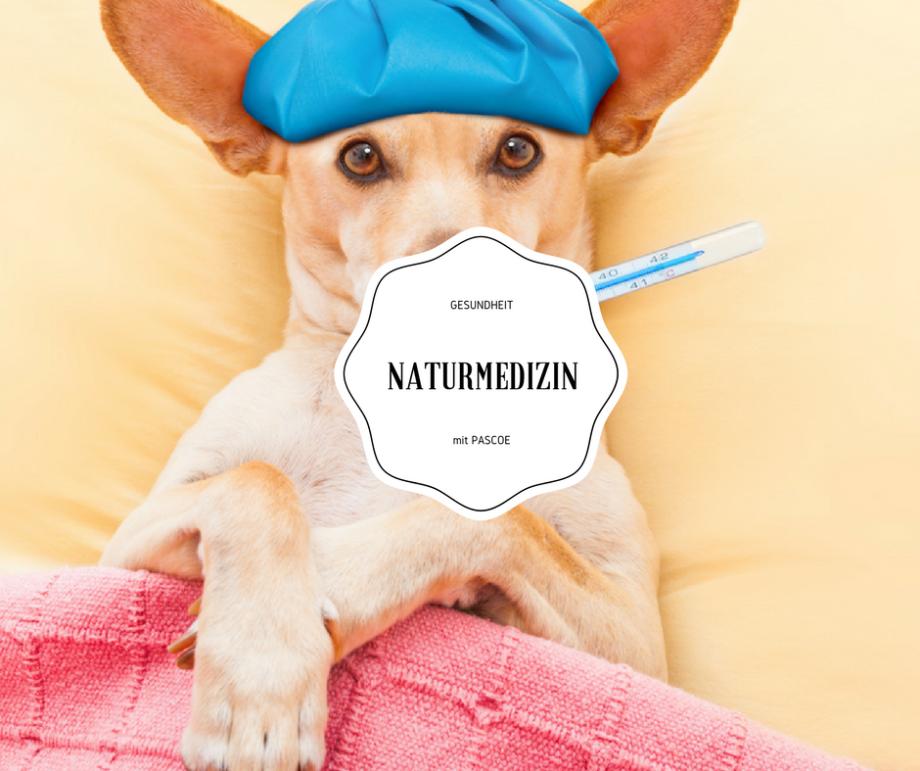 Was Du mit Pascoe Naturmedizin für Dein Lymphsystem tun kannst!