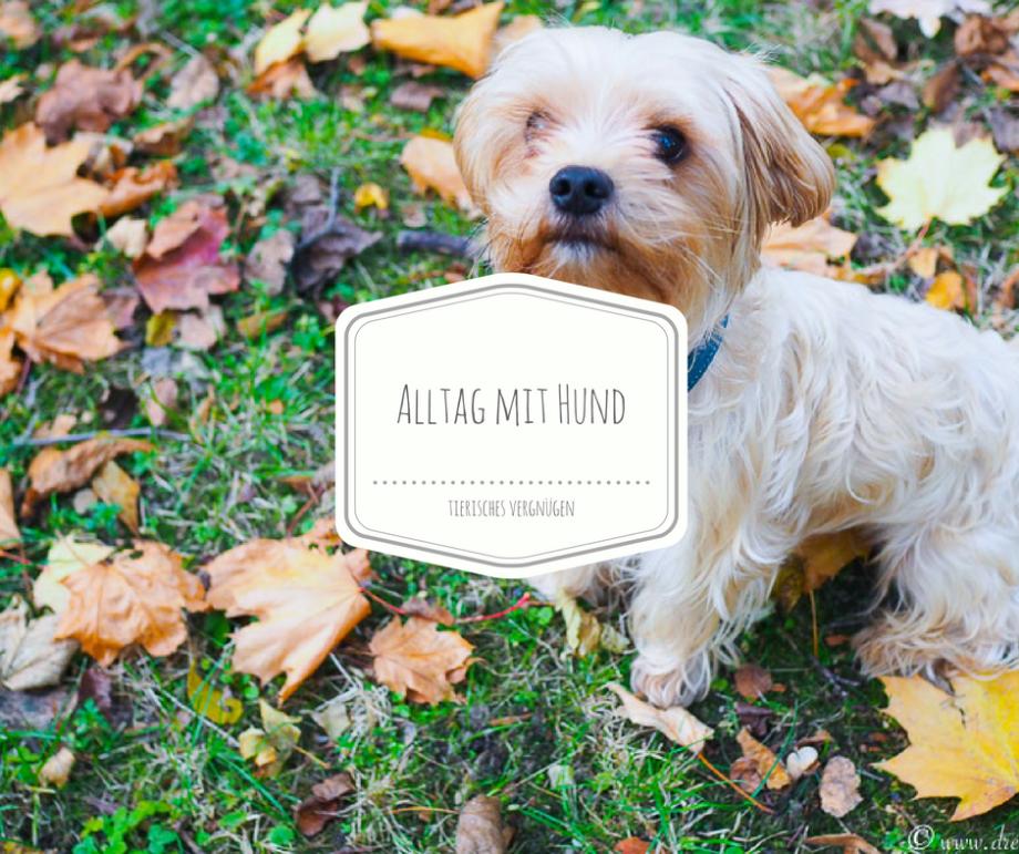 Die Anschaffung eines Hundes und wie man den Alltag mit einem Hund organisiert? Bommel testet Wildborn Softjewel!