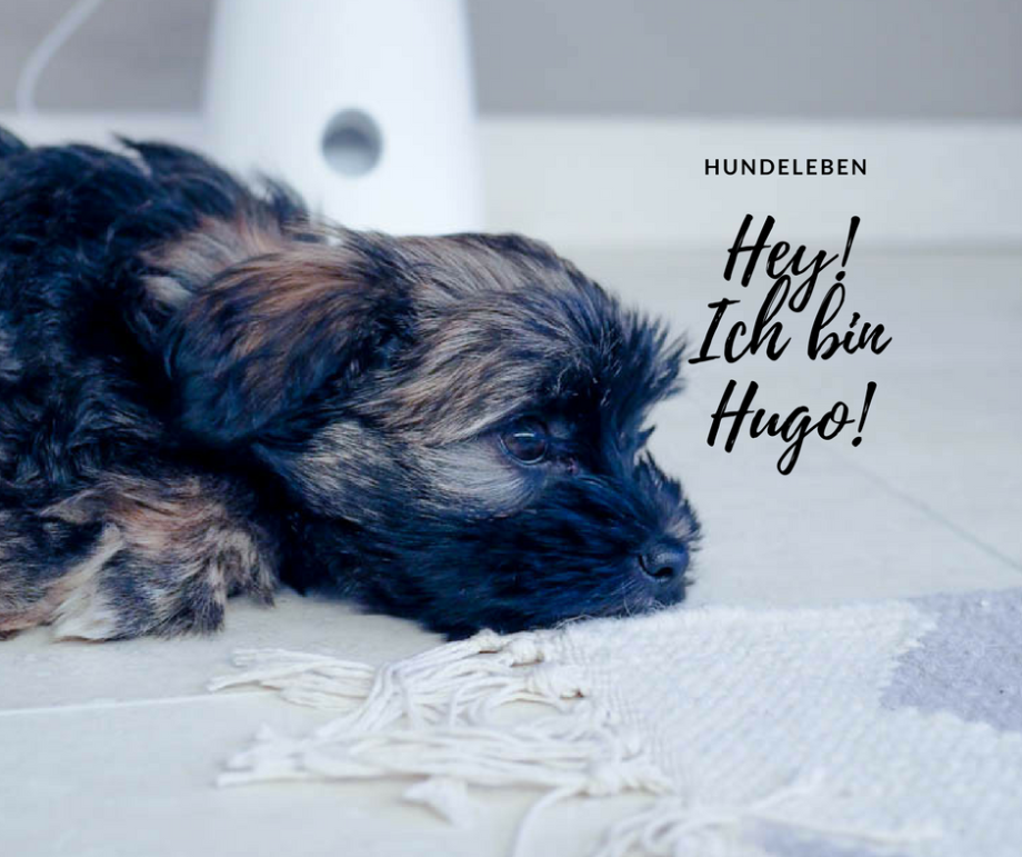 Hallo, ich heiße Hugo und wohne jetzt hier…die Wahrheit über den Alltag mit einem Hundewelpen!