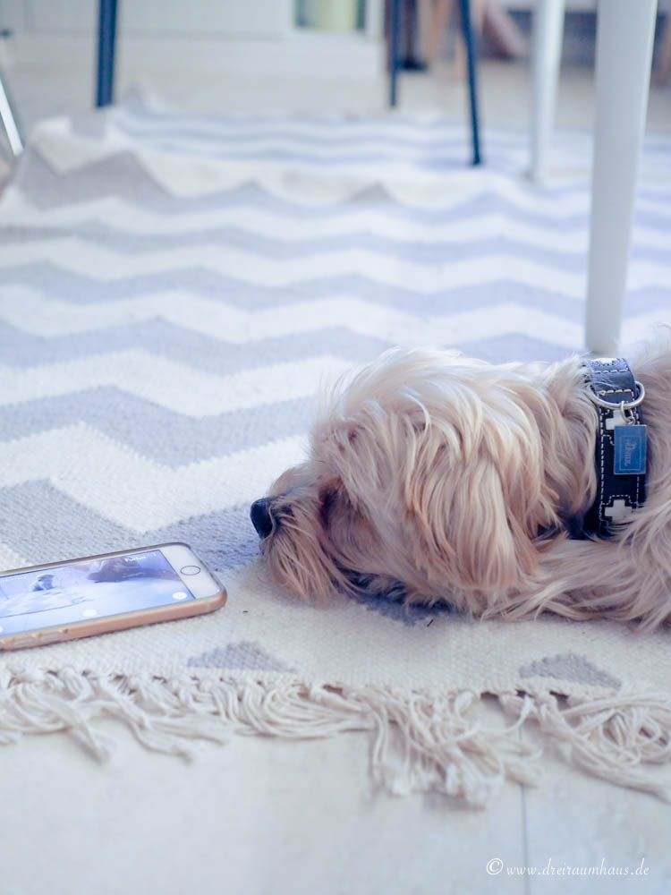 Hallo, ich heiße Hugo und wohne jetzt hier...die Wahrheit über den Alltag mit einem Hundewelpen! Hallo, ich heiße Hugo und wohne jetzt hier...die Wahrheit über den Alltag mit einem Hundewelpen! Die Furbo Hundekamera!