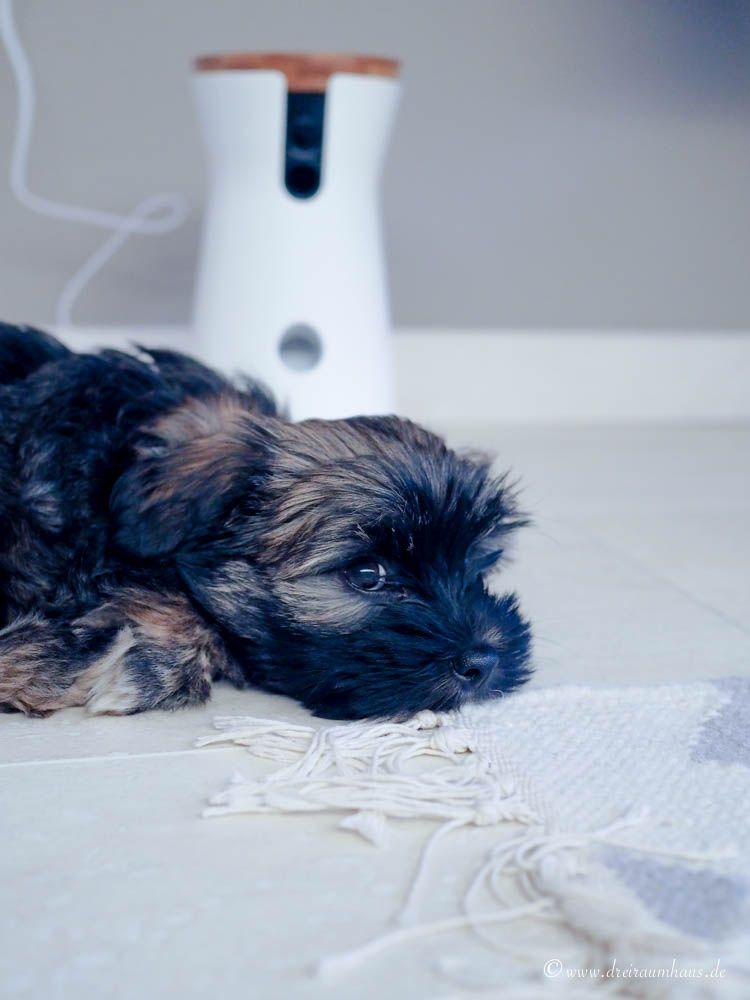 Die Furbo Hundekamera!