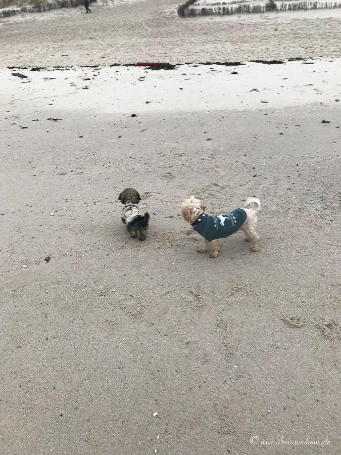 Wie sieht es mit Urlaub auf Sylt und Hunden aus?
