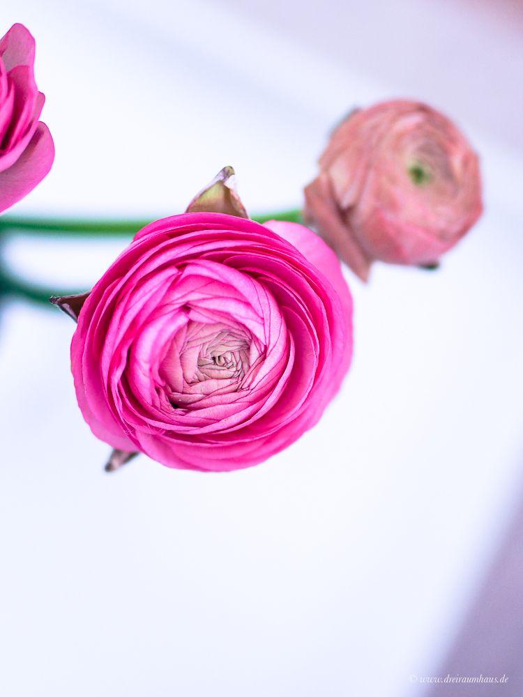 Dekosamstag - ein rosa Hocker aus Samt als Beistelltisch!
