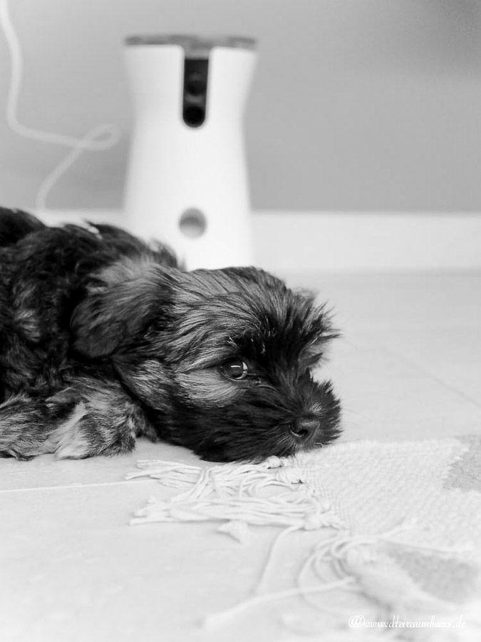 Smart Living: Hugo und die smarte Sicherheit bei der Hundeerziehung in den eigenen 4 Wänden!