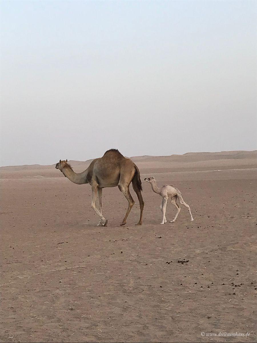 Warum Dubai Urlaub doch nicht so doof ist, wie ich dachte!
