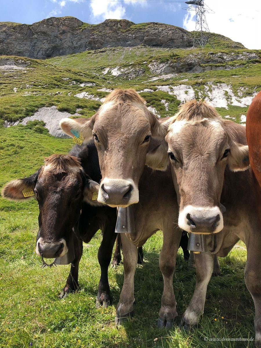 Die Schweiz und warum ich jederzeit nach Flims zurückkehren würde…eine Auszeit in der Sardona, am Caumasee und im Hotel Adula!