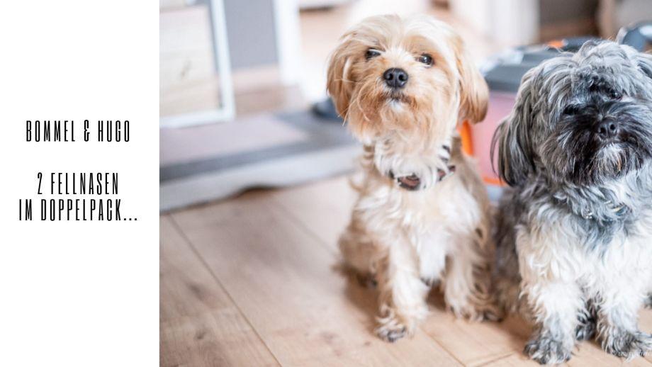 Ein Staubsauger für Tierhaare - der THOMASAQUA+ PET & FAMILY