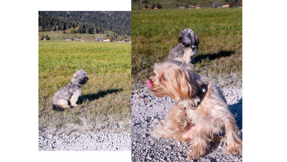 Ein Staubsauger für Tierhaare - der THOMASAQUA+ PET & FAMILY - ein Tierhaarstaubsauger!