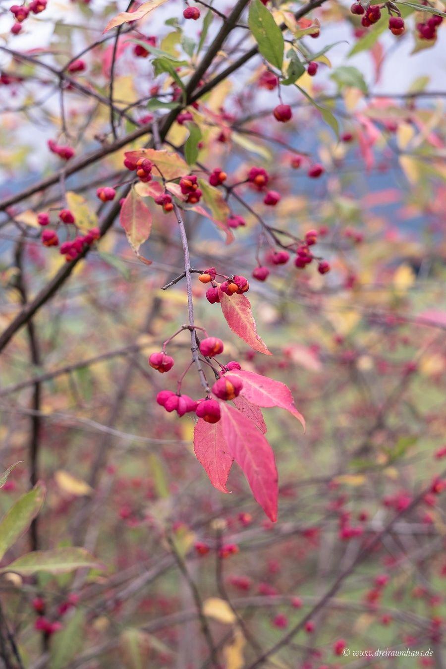 Spontaner Kurzurlaub in Österreich? Die Herbstferien stehen vor der Tür...