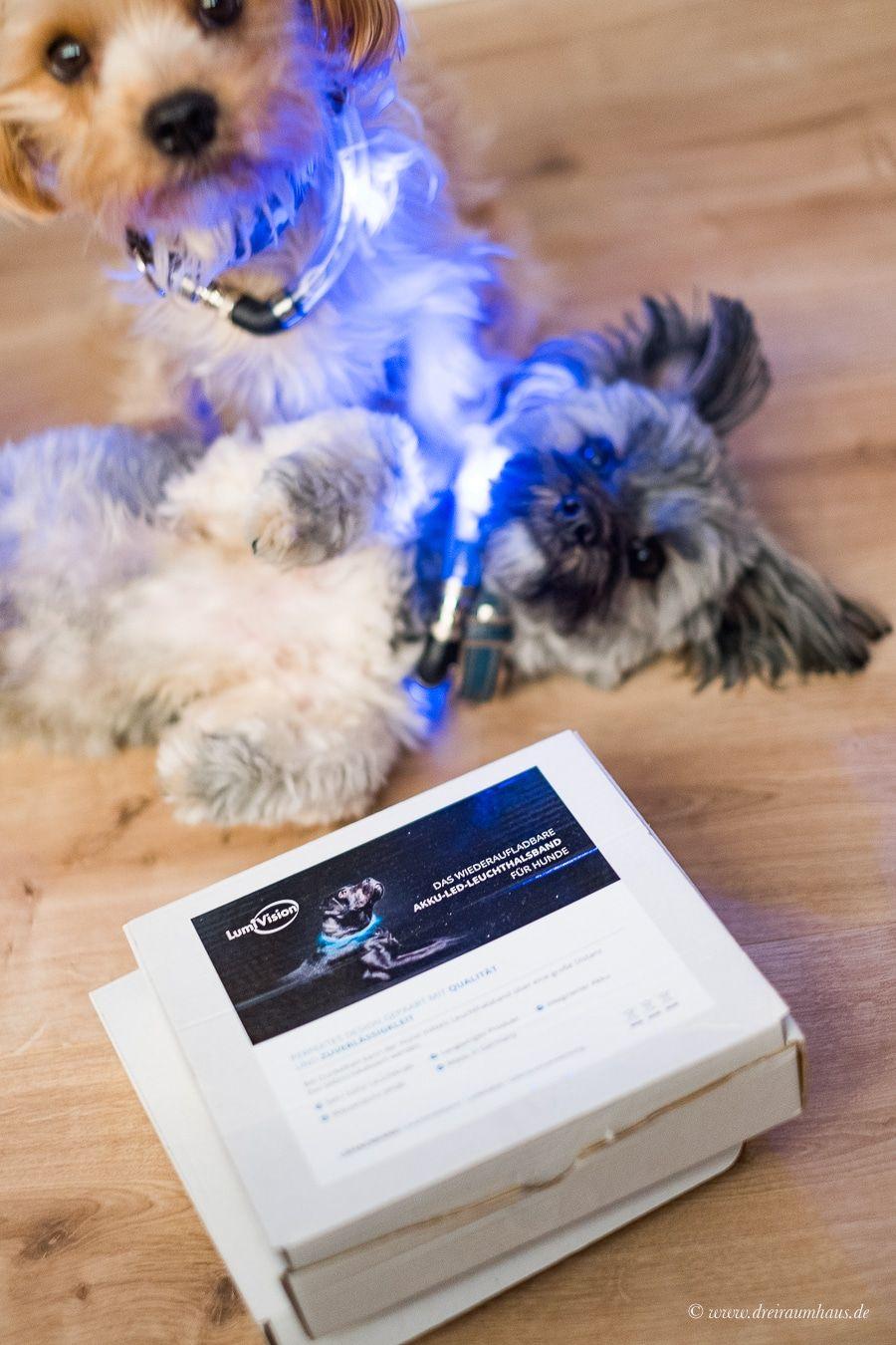 Sicherheit für Hunde und Hundehalter mit dem LumiVision AKKU Leuchthalsband mit LED von Tierarzt24.de!