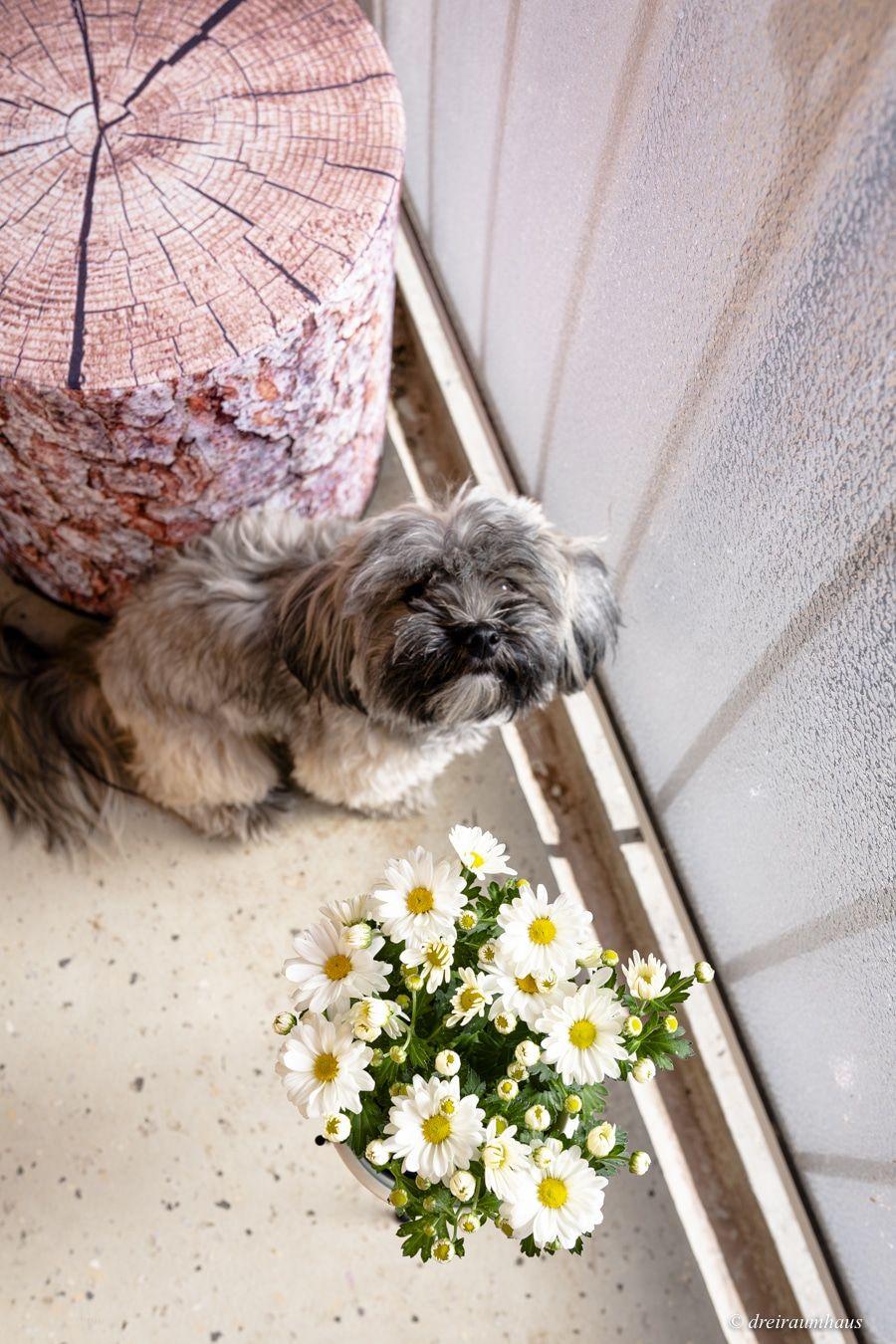 Dekosamstag: Vorher/Nachher - Wie richtet man günstig einen kleinen Balkon ein?