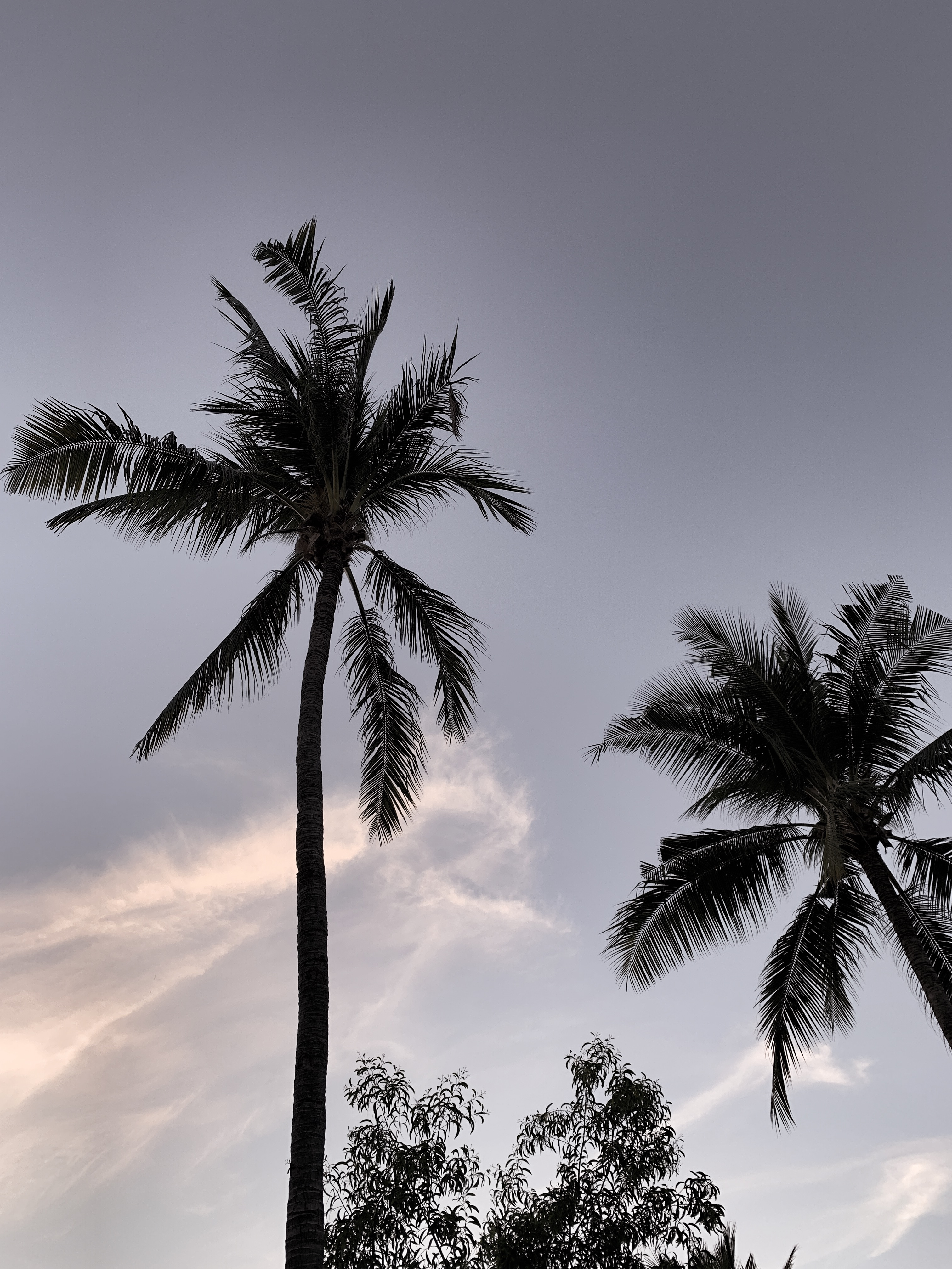 Sommer auf Bali - Palmen auf Bali.