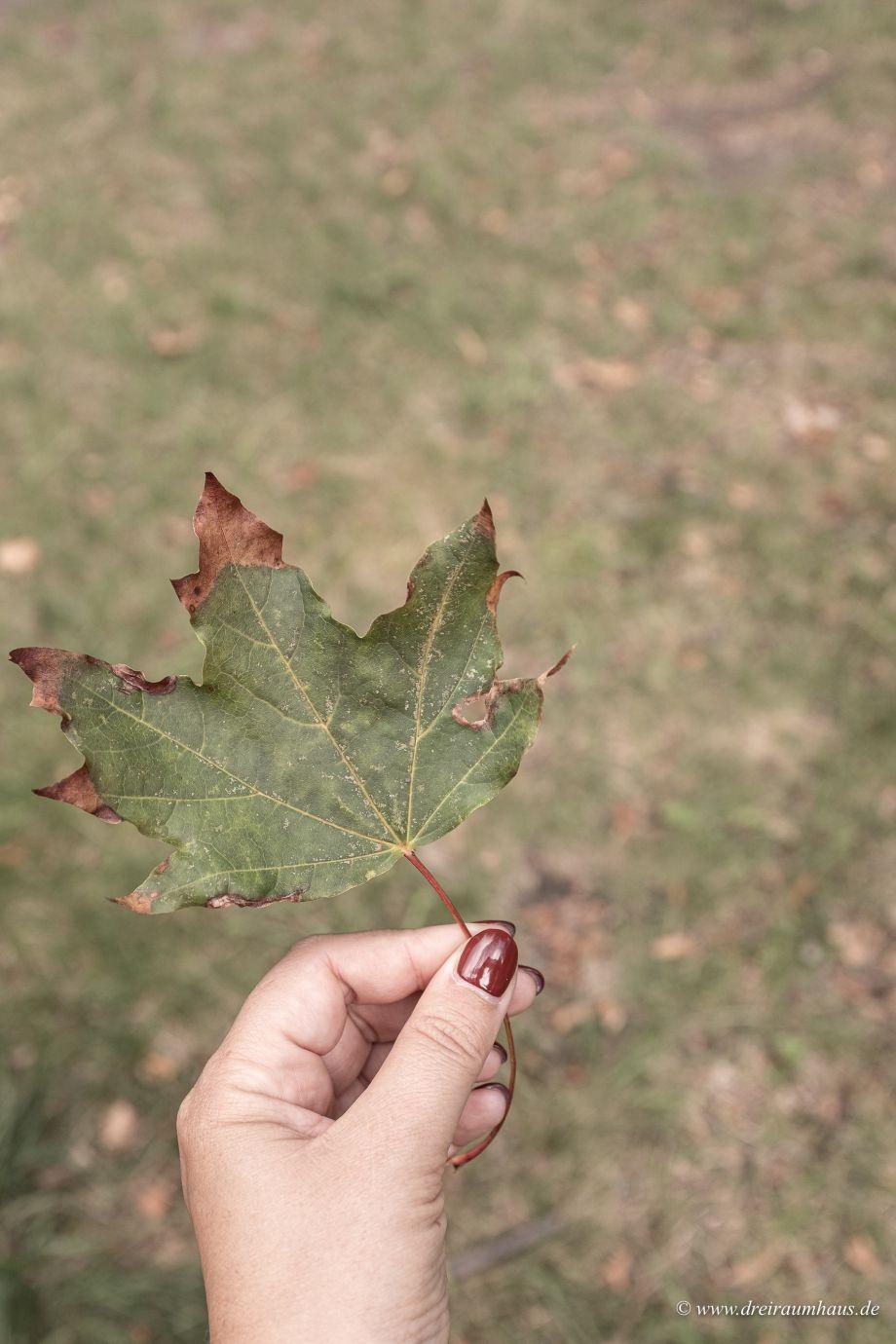 Fit und gesund durch den Herbst…