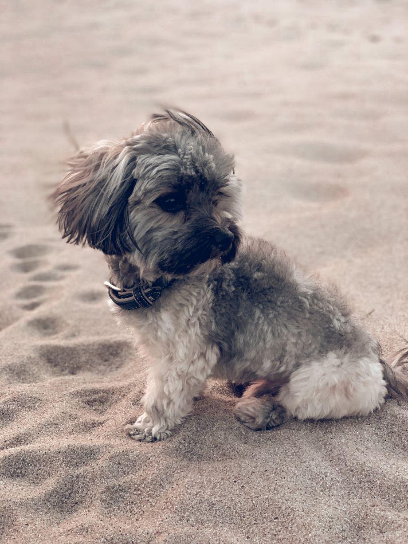 Warum futalis das beste Hundefutter für Hugo & Bommel ist!