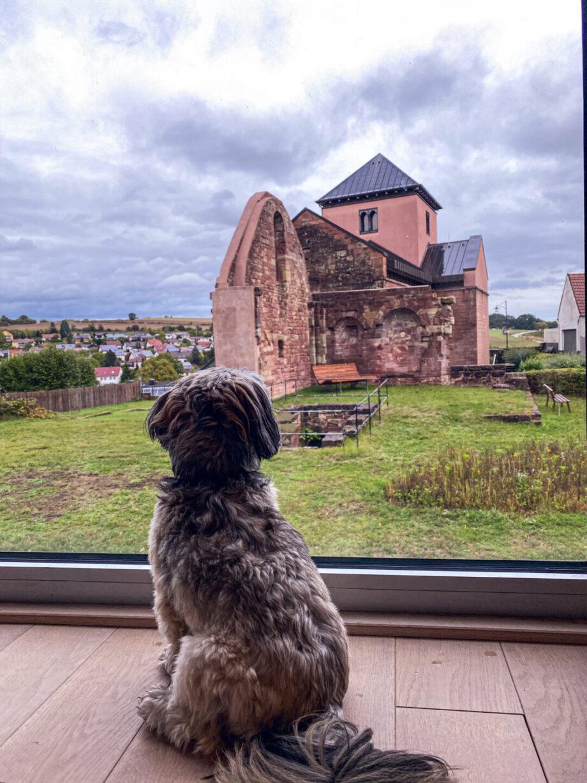 #Koffergeschichten #14 aus der Pfalz - ein Lösch für Freunde! Kloster Hornbach!