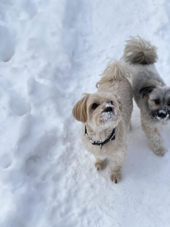 Meine 8 Tipps für pures Hundeglück! CBD ÖL für Hunde - fitono dog